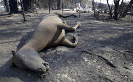 Incendii Australia 3