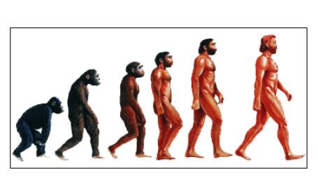 evolutia