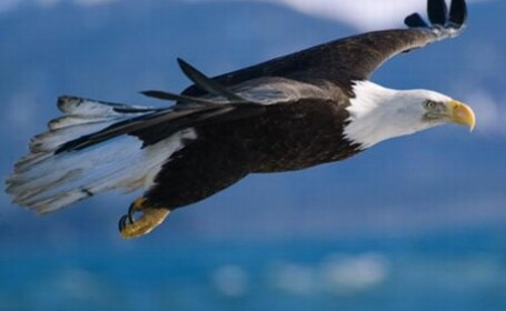 Vulturul care a fentat moartea!