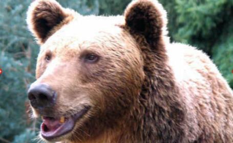 Un urs a calatorit cu masina de gunoi pana in centrul orasului. Ce reactie au avut trecatorii