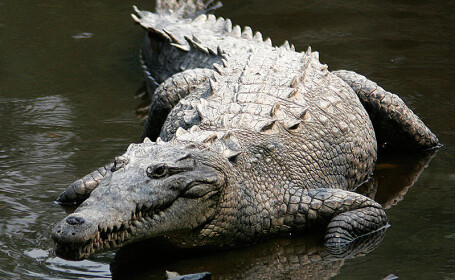 Autoritatile din Indonezia au gasit solutia pentru a-i pazi pe detinutii inchisi pentru trafic de droguri: crocodili flamanzi