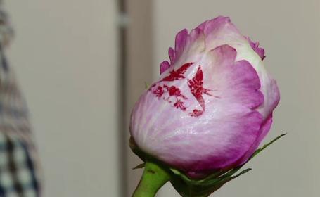 FLORI DE VALENTINE\'S DAY. Trandafirii imprimati, solutia perfecta pentru un cadou pe 14 februarie