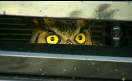 O femeie din Statele Unite era sa lesine cand a vazut ce traia langa motorul masinii sale