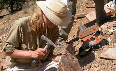 paleontolog, fosile