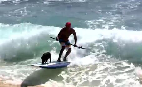Povestea lui Kama. Porcusorul din Hawai care a invatat sa faca surfing