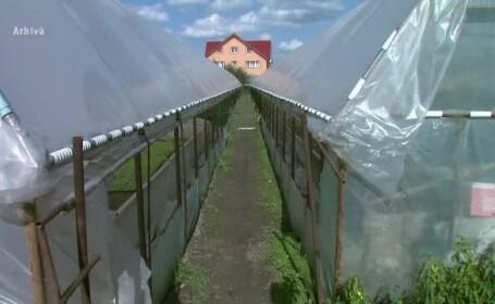 Olandezii ne arata ce poate schimba o asociatie in agricultura. Secretul succesului in tara cu doar 2 mil. ha teren agricol