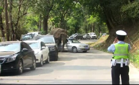 elefant China - stiri