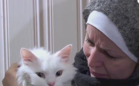pisica refugiati