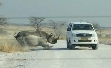 Momentul terifiant in care un rinocer ataca masina unor turisti, in timpul unui safari. Ce s-a intamplat dupa cateva momente