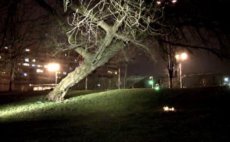 Un copil a murit in Parcul IOR, dupa ce a cazut dintr-un copac. Un martor sustine ca nu a fost lasat sa-i salveze viata