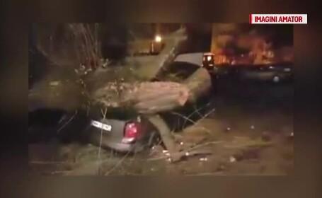 Copac peste masina