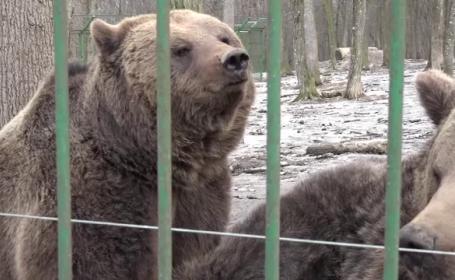 ursi, precizere, meteo, iarna, ziua ursilor,