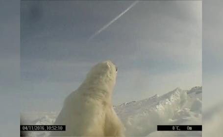 ursi polari, go pro