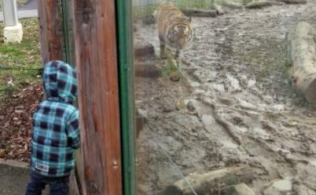 Blocați în grădina zoologică