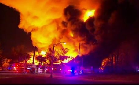 Cum a incendiat un câine o clădire, din joacă. Poliţia căuta un piroman