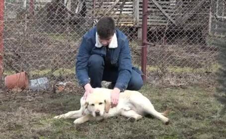 labrador furat