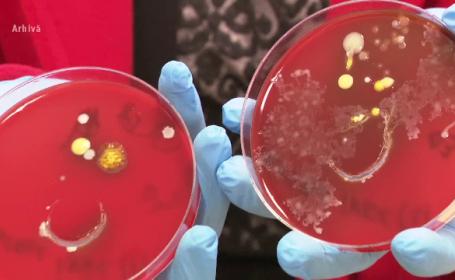 acinetobacter, bacterii, spitale