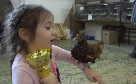 """Expoziție dedicată păsărilor, în Sebeș: """"Ajung și la 4-5 kilograme"""""""