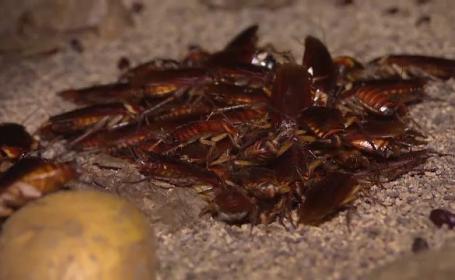 La două grădini zoologice din Texas, vizitatorii pot poteza gândacii cu numele foștilor parteneri de viață