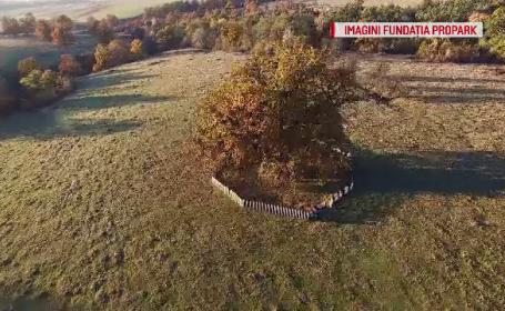Un stejar secular a pus pe harta turistică a țării un sat uitat de lume