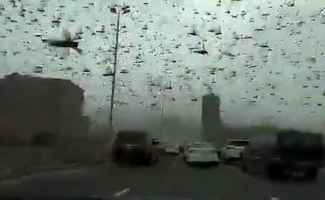 VIDEO. Scene apocaliptice filmate în Bahrain, unde întregul cer a fost invadat de lăcuste
