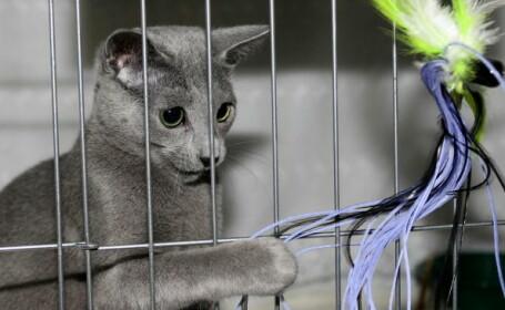 Cum a reușit o pisică să devină candidat la alegerile municipale dintr-un oraș din Franța