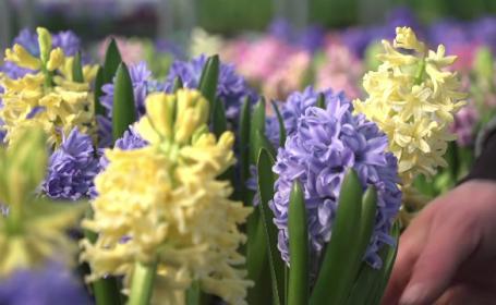 Industria florilor, \