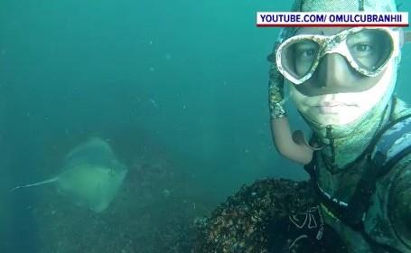 Imagini rare surprinse în Marea Neagră. Motivul pentru care zeci de pisici de mare au venit aproape de țărm