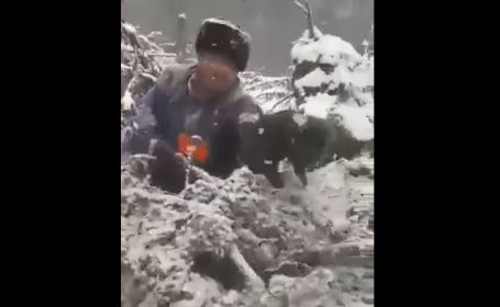 """Patru pui de urs scoși din bârlog și aruncați în zăpadă. Ministrul Mediului intervine în cazul """"ursuleților"""""""