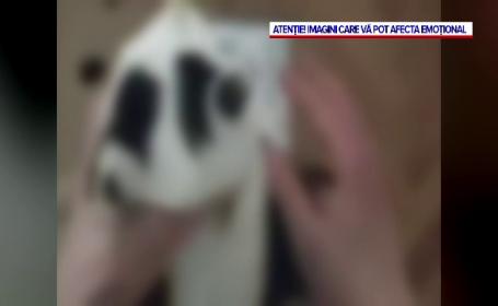 Adolescent din Cluj-Napoca, dat pe mâna poliției de propriul tată după ce a schingiuit și omorât un pui de pisică