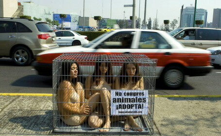 Protest in lenjerie intima in Mexico City