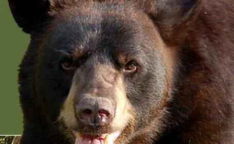 Inca o familie de ursi in vizita la tomberoanele de pe DN1!