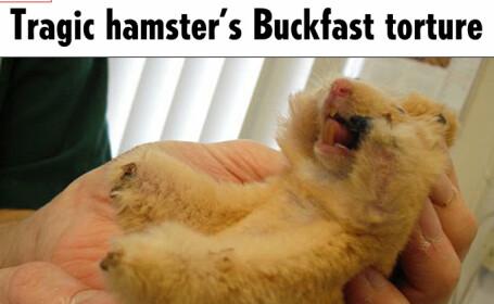 Hamster chinuit