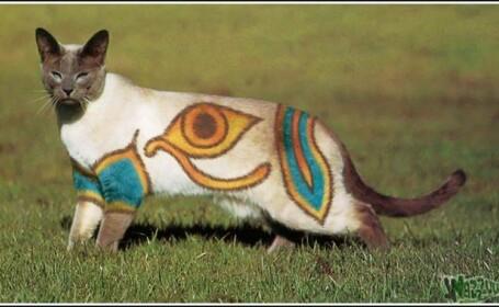 pisica, pictura