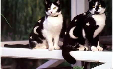 pisici, pictura