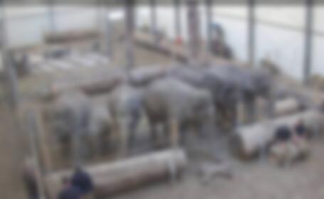 elefanti blur