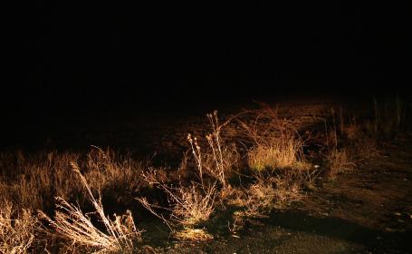 Un tanar de 25 de ani din Lugoj, disparut de cateva zile, a fost gasit mort pe un camp