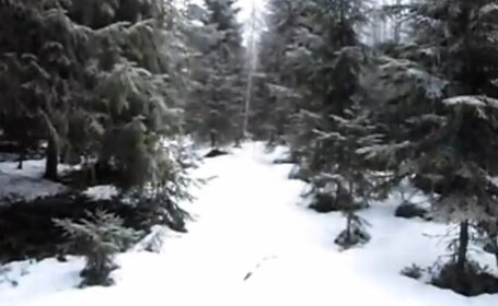 VIDEO. Zgomote inexplicabile inregistrate intr-o padure. Turistii cauta explicatii