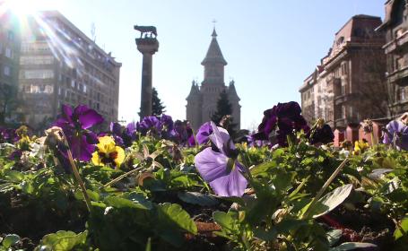 caldura, centru Timisoara