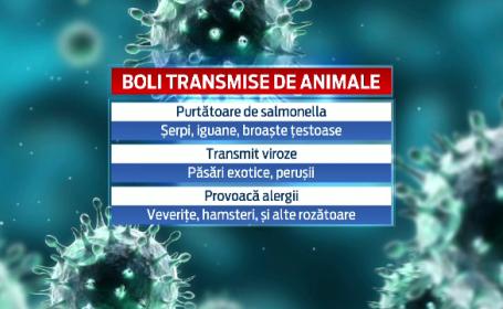 Raport ingrijorator realizat de francezi. Animalele cumparate copiilor, purtatoare de boli grave