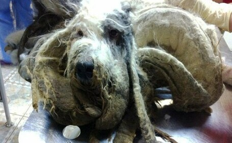 A ajuns de nerecunoscut dupa ce i-a murit stapanul si timp de un an nu a fost ingrijit. Cum arata acum cainele. FOTO