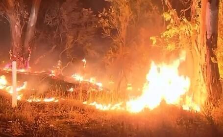 Sudul Australiei este afectat de cele mai puternice incendii de padure din ultimii 30 de ani