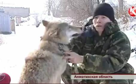 Tara unde lupii sunt folositi pe post de caini de paza. \