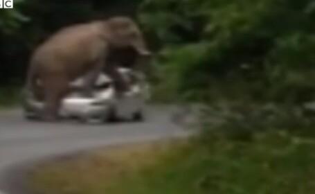 Elefant, Thailanda
