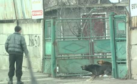 Seful ASPA acuza ONG-urile ca ar fi exportat maidanezii Capitalei unor retele de zoofilie. Replica lor:\