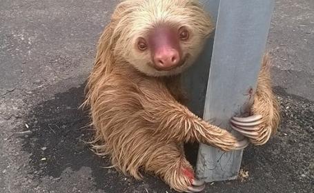 Reactia simpatica a unui lenes care a vrut sa traverseze o autostrada in Ecuador. Imaginile amuzante s-au viralizat