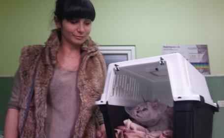 A cumparat din mall o pisica de rasa, cu 1.600 de lei. Ce a descoperit cand a ajuns acasa