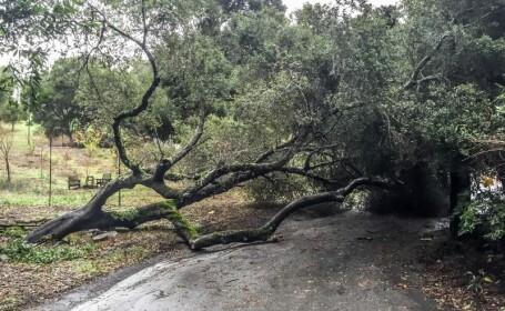Au vazut cum doua femei sunt prinse intr-o masina avariata de un copac. Reactia inexplicabila a trecatorilor