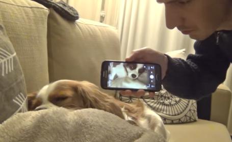 Si-a inregistrat cainele in timp ce sforaia si i-a pus inregistrarea cand dormea. Reactia animalului e savuroasa. VIDEO