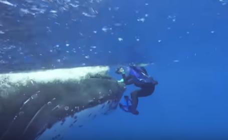 Imaginile devenite virale: biolog marin, salvat de o balenă. VIDEO